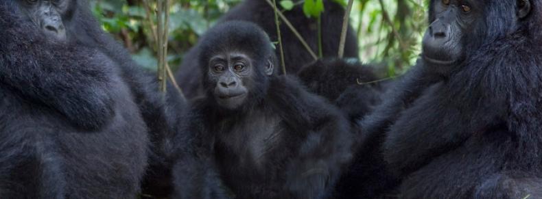 Forêt de Bwindi