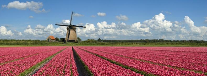Paysage typique des Pays-Bas