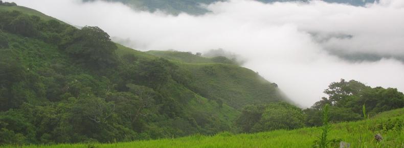 Forêt dans les nuages