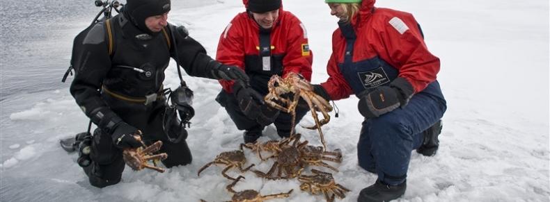 Pêche aux crabes royaux