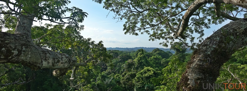 Canopée amazonienne