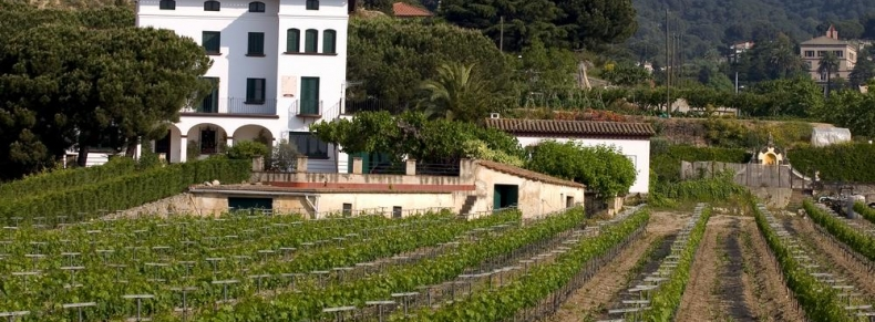 Vignobles de Mendoza