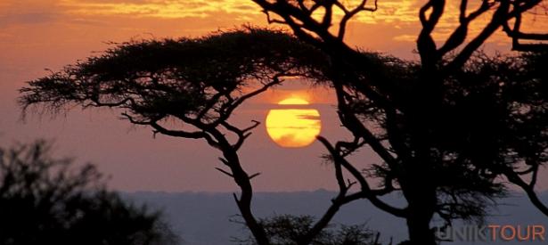 Parc de Tarangire