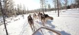 Safari traineau à chiens