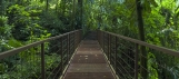 Pont suspendu dans la jungle