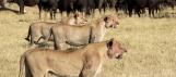 vie sauvage Afrique du Sud